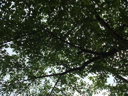 桜 2020年8月2日