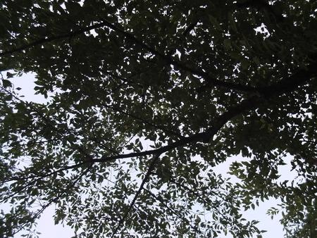 桜 2020年8月8日
