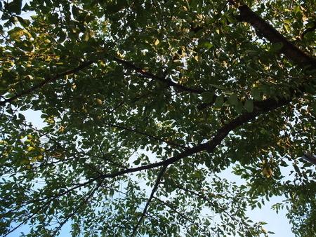 桜 2020年8月18日