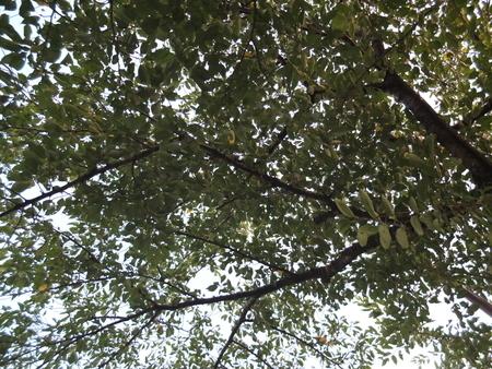 桜 2020年8月19日
