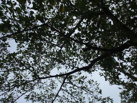 桜 2020年9月6日 台風10号