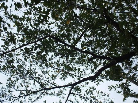 桜 2020年9月7日