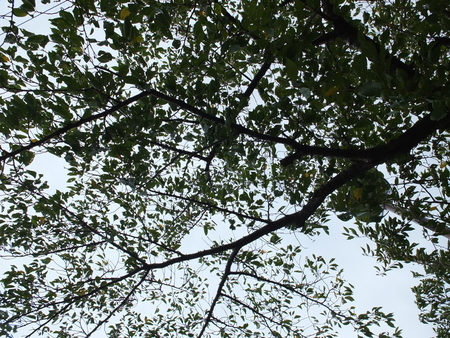 桜 2020年9月9日
