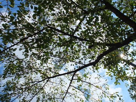 桜 2020年9月15日