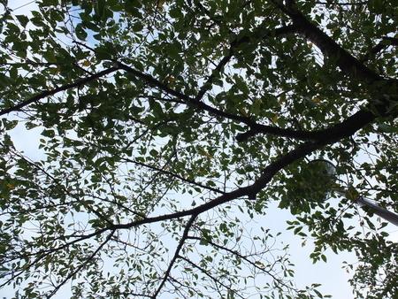 桜 2020年9月16日