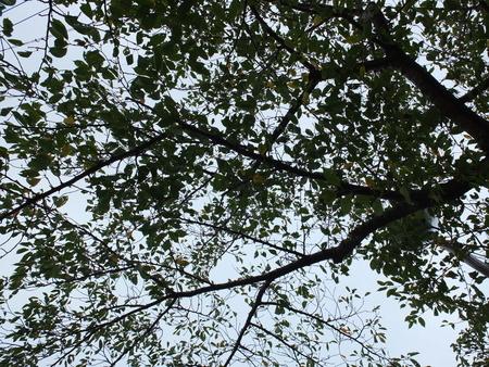 桜 2020年9月18日