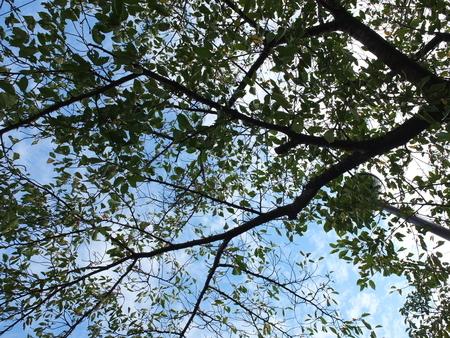 桜 2020年9月20日