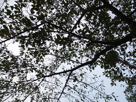 桜 2020年9月22日