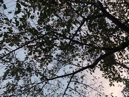 桜 2020年9月23日