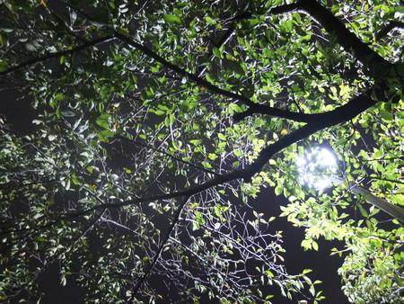 桜 2020年9月24日