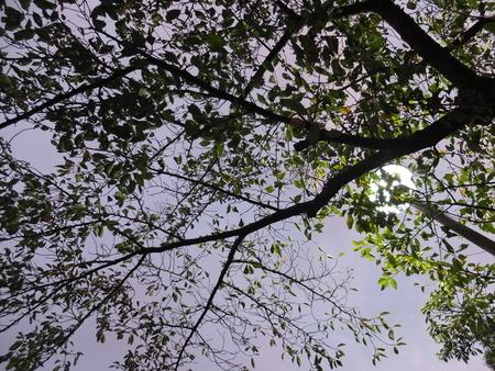桜 2020年10月3日