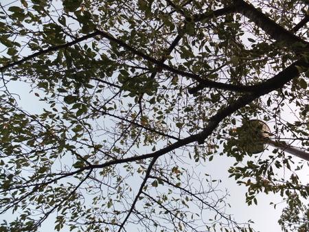 桜 2020年10月5日