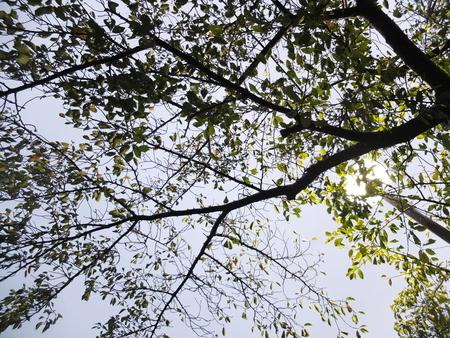 桜 2020年10月9日