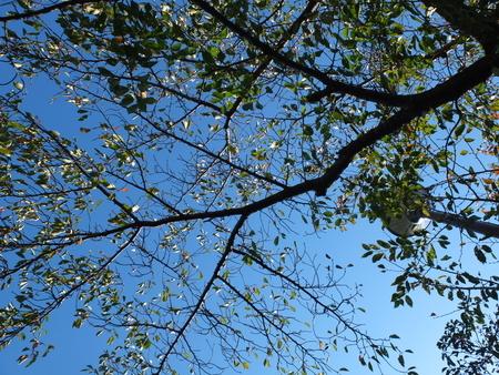 桜 2020年10月20日