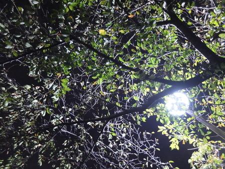 桜 2020年10月22日