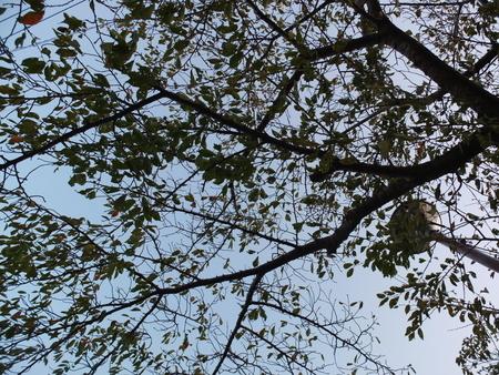 桜 2020年10月25日