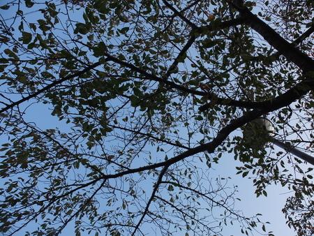 桜 2020年10月31日