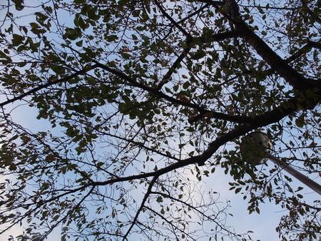 桜 2020年11月1日