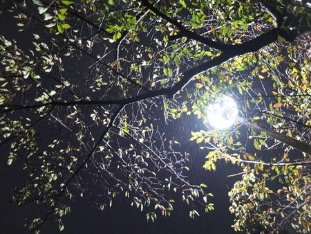桜 2020年11月2日