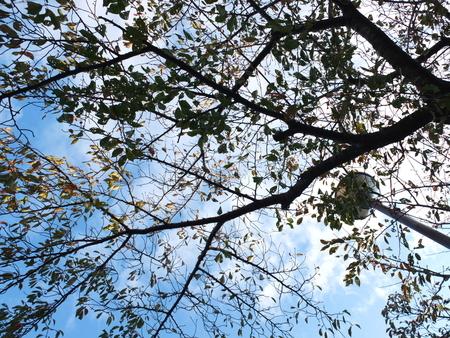 桜 2020年11月4日
