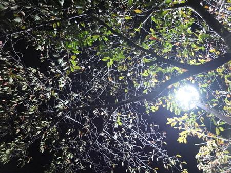 桜 2020年11月5日