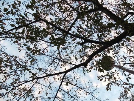 桜 2020年11月6日