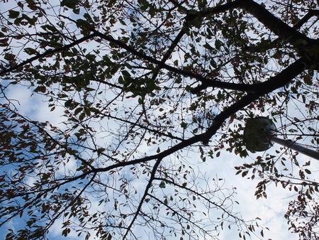 桜 2020年11月8日