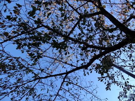 桜 2020年11月9日