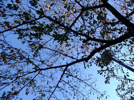 桜 2020年11月11日