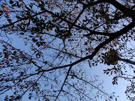 桜 2020年11月12日