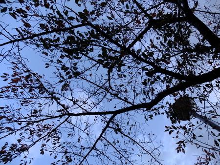 桜 2020年11月15日