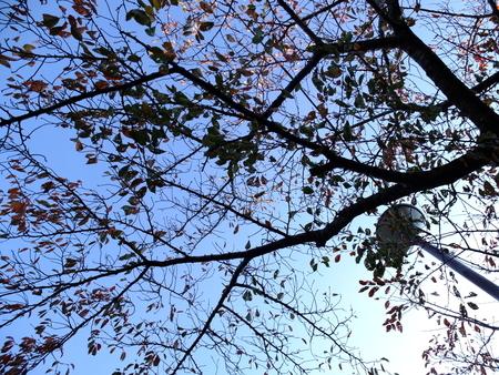桜 2020年11月16日