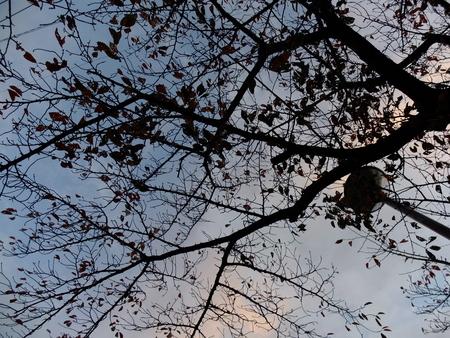 桜 2020年11月19日
