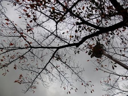桜 2020年11月20日
