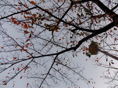 桜 2020年11月21日