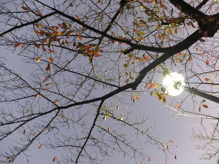 桜 2020年11月23日