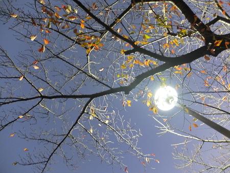 桜 2020年11月24日