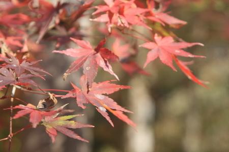 紅葉の山の紅葉