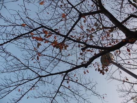 桜 2020年11月26日