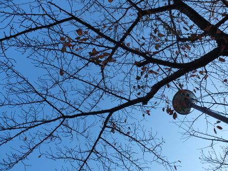 桜 2020年11月27日