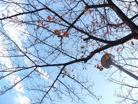 桜 2020年11月28日