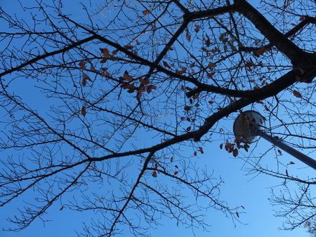 桜 2020年11月29日