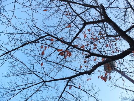 桜 2020年11月30日