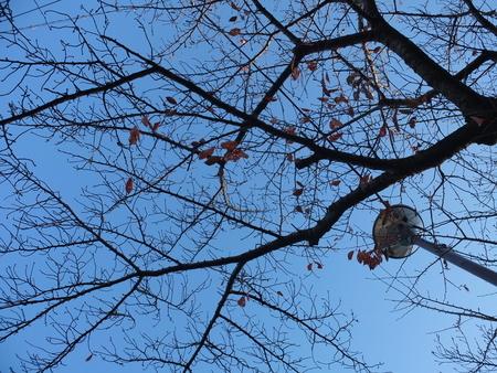 桜 2020年12月1日