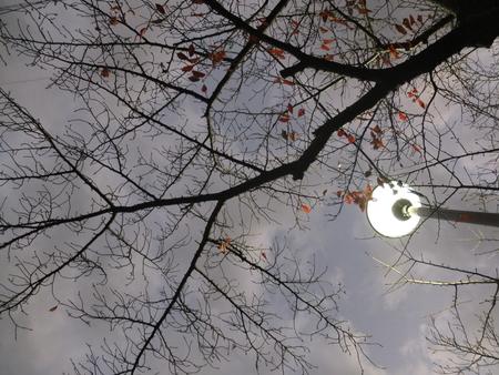 桜 2020年12月2日