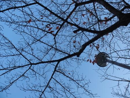 桜 2020年12月3日