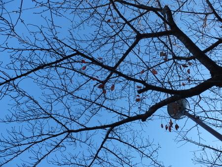 桜 2020年12月4日