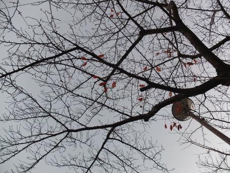桜 2020年12月5日