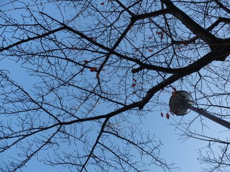 桜 2020年12月6日