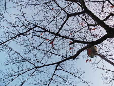 桜 2020年12月7日